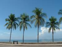 Palm trees line the boardwalk of Puntarenas