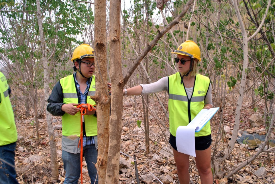 Tropical Plant Ecology