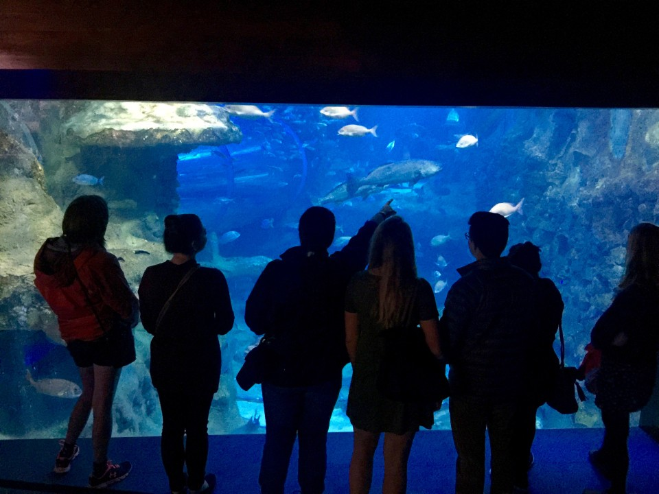 The San Sebastian Aquarium is one of the most popular attractions in the Basque Country