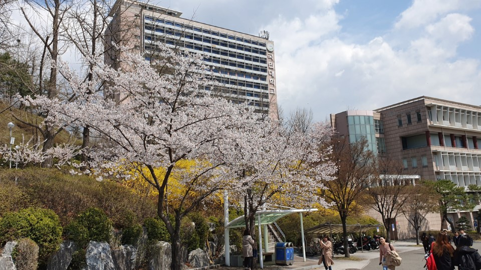 Kookmin University with cherry blossoms of spring