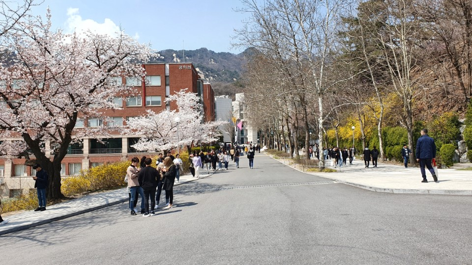 The Kookmin campus during spring with cherry blossoms